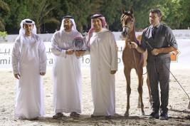 خيول «عجمان» تتألق في بطولة الإمارات لمربيي الخيل العربية ٢٠١٨ وتحقق ذهبية وفضية