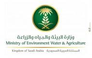 عدد 101 وظيفة شاغرة في مركز الملك عبدالعزيز للخيل العربية ومحجر الخيل