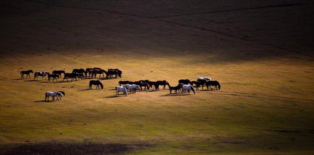 جولة جديدة من المفاوضات المصرية الأوروبية لرفع الحظر عن تصدير الخيول