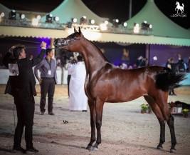 بطولة العرب 2018 بنسختها الأولى نجاح منقطع النظير .. وهوية عربية متكاملة