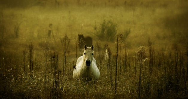 الحمل والولادة في الخيول .. متابعة وترقب – الجزء الأول