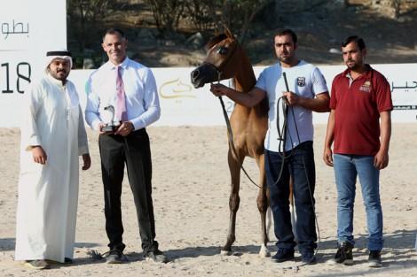 النتائج النهائية لبطولة الفجيرة لجمال الخيول العربية 2018 بالإمارات