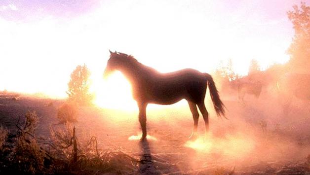 دراسة بعد فك شفرة جينية: أمراض وراثية لدى الخيول  تشبه إلى حدٍ كبير مايعانيه البشر