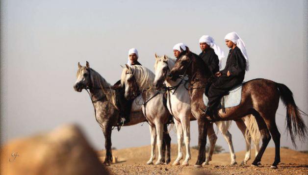 «الزهراء».. أقدم محطة مصرية للحفاظ على الخيول العربية