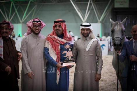 صور مقتطفة من اليوم الثاني لبطولة الرياض 2019 لجمال الخيل العربية الأصيلة