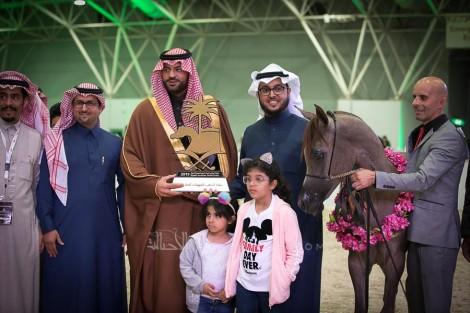 النتائج النهائية بالصور لبطولة الرياض 2019 لجمال الخيل العربية الأصيلة
