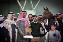 صور مقتطفة من اليوم الختامي لبطولة الرياض 2019 لجمال الخيل العربية الأصيلة