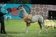 ذهبية وفضية وبرونزية لخيول «الزبير» في بطولة عجمان ٢٠١٩