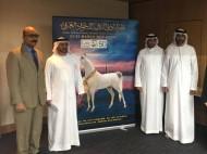 اختيار 12 حكماً لبطولة دبي الدولية للجواد العربية 2019 عن طريقالقرعة