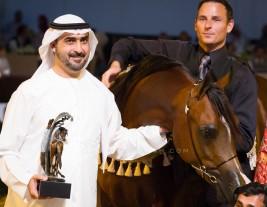 نبذة عن مزرعة خيل : مربط البداير … قصة شغف محمد بن سعود بالخيول العربية