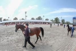 النتائج النهائية لبطولة أبوظبي الدولية لجمال الخيول العربية 2019