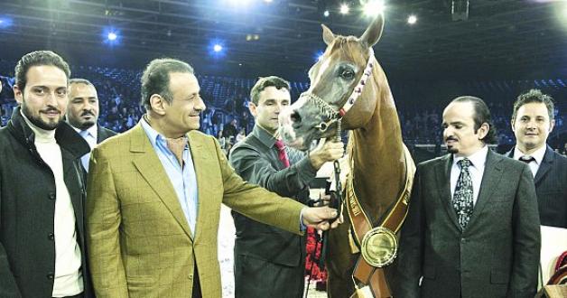 الجياد السعودية تحقق خمس ميداليات في بطولة كأس العالم لجمال الخيل العربية