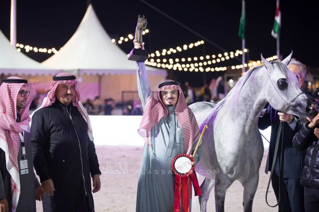 Two Gold medals, a silver and a bronze for Al Khalediah Stables in the Asharqia Arabian Horse Classic