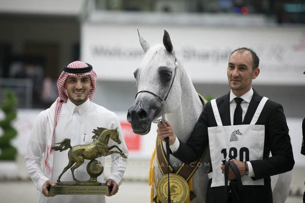 """""""Pepita"""" wins the golden medal in the Mares Championship for Akmal Stud"""