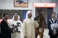 Dubai Stud collects 5 top medals at the end of the Sharjah International Arabian Horse Festival