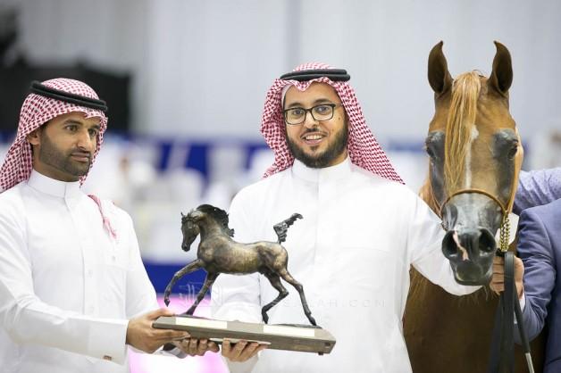 نتائج اليوم الأول لبطولة دبي الدولية ٢٠١٩ للجواد العربي