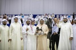 صور مقتطفة من اليوم الثاني من بطولة دبي ٢٠١٩ للجواد العربي