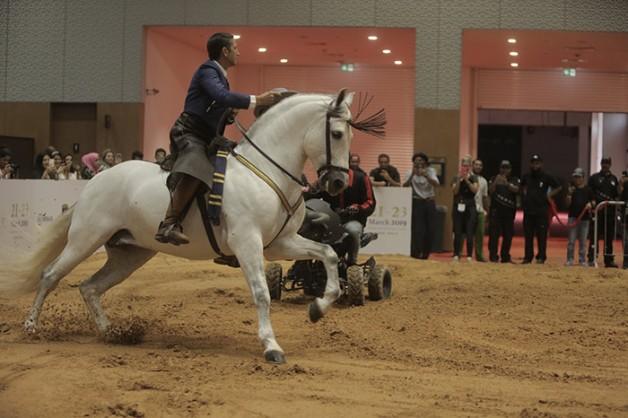 أنشطة وفعاليات يجب مشاهدتها في معرض دبي الدولي للخيل