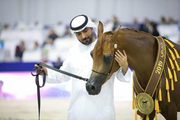 «فيجين» لمربط البداير تحلق عالياً بذهبية مهرات دبي 2019