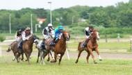 انطلاق النسخة العاشرة من الملتقي العالمي للخيول العربية في بوخارست