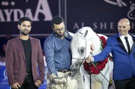 خيول «السيد» تواصل تألقها في المحافل العالمية بذهبية وفضية في بطولة كل الأمم 2019 بألمانيا