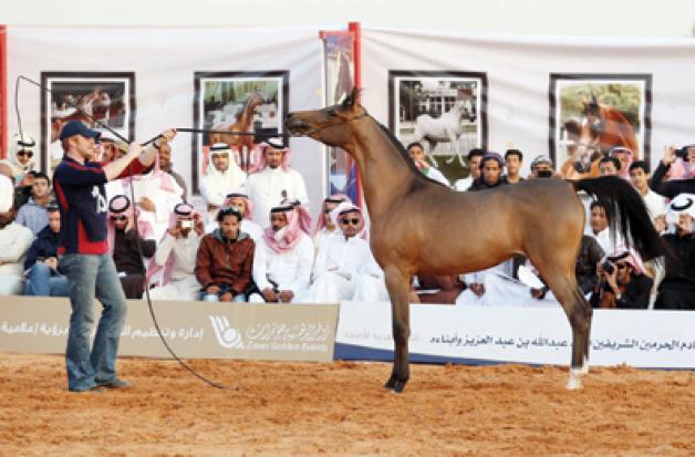 الملك يتبرّع بـ 10 خيول عربية للمعوقين في مزاد التنهات