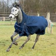 أغطية (أجلة) الخيول .. أجوبة كثيرة لعدد من التساؤلات