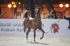 النتائج النهائية لبطولة الإمارات لمربي الخيول العربية 2019