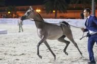 صور مقتطفة من بطولة الإمارات 2019 لمربي الخيول العربية