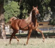 «الزراعة المصرية» تنظم مزادًا لبيع فائض خيول محطة الزهراء الثلاثاء المقبل