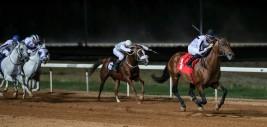 """""""صخر الخالدية"""" يتوج بكأس رئيس الإمارات للخيول العربية بالرياض"""