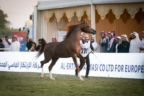 صور مقتطفة من اليوم الختامي لبطولة مركز الملك عبدالعزيز ٢٠١٩ الدولية لجمال الخيل العربية