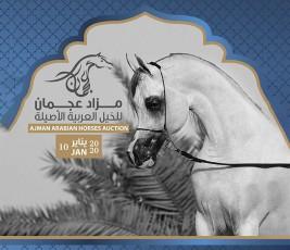 قائمة خيل مزاد عجمان 2020 للخيول العربية