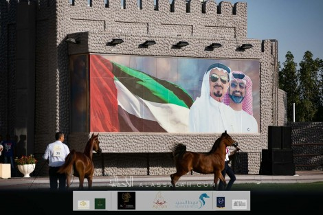 صور مقتطفة لليوم الأول من بطولة عجمان 2020 لجمال الخيول العربية