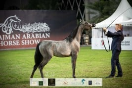 Final results for the 18th Ajman Arabian Horse Show 2020
