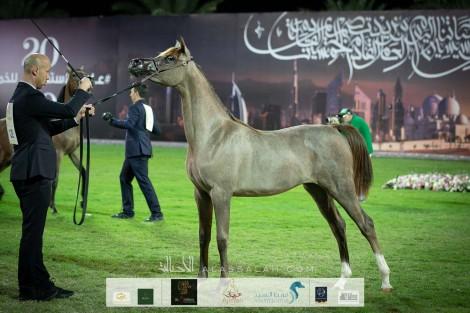 النتائج النهائية للنسخة الـ 18 لبطولة عجمان لجمال الخيول العربية 2020