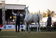 ختام «الخالدية»… وترقب لمهرجان الأمير سلطان بن عبدالعزيز العام المقبل