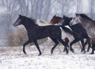 هواء الشتاء الطلق.. يجنب الخيول كثيرا من مشاكل التنفس!