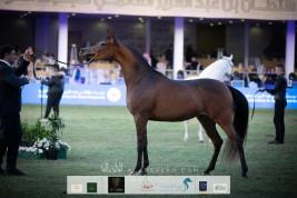 صور مقتطفة من اليوم الأول من مهرجان الأمير سلطان العالمي 2020 لجمال الخيل العربية