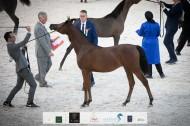 «البداير» يتألق بإنتاجه بذهب وبرونز بطولة الإمارات الوطنية 2020