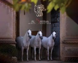 بطولة الشراع الدولية 2020 تستقبل الخيول المشاركة ابتداء من صباح غدٍ الاثنين
