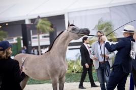 """""""الأريام بنفسج"""" الأجمل في افتتاح دولية الشراع 2020 و «دبي» يتصدر ثلاث فئات ..!"""