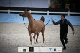 صور مقتطفة من اليوم الثاني من بطولة الشراع الدولية ٢٠٢٠ لجمال الخيل العربية