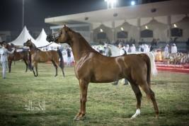 «ابوظبي الدولية ٢٠٢٠» تحافظ على نهجها بدعم أكبر عدد من الملاك في توزيع الجوائز المالية
