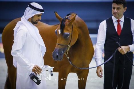 صور مقتطفة من اليوم الأول من بطولة دبي الدولية ٢٠٢٠ للجواد العربي