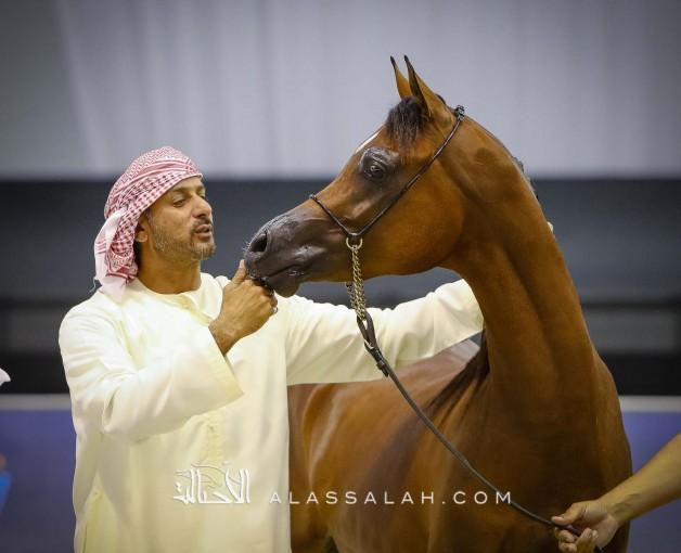 صور مقتطفة لليوم الختامي من بطولة دبي الدولية للجواد العربي ٢٠٢٠