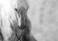 بايونير للمزادات تنظم مزاداً للخيول العربية مرافقاً لبطولة دبي