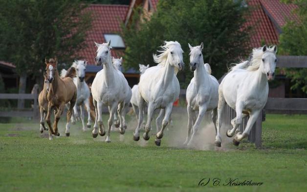 الخيول لعلاج الإكتئاب والقلق والتوحد .. في الاوروغواي