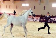 سلطان بن زايد يشهد منافسات اليوم الثاني من بطولة جمال الخيول العربية