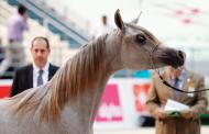 10 مسابقات في مهرجان الشارقة للجواد العربي